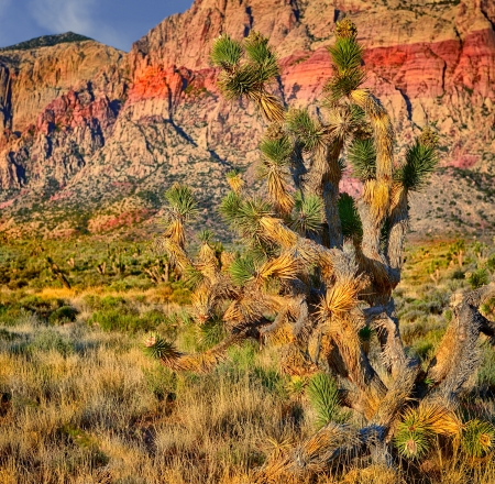 Nice Cactus Image at Red Rock Nevada photo