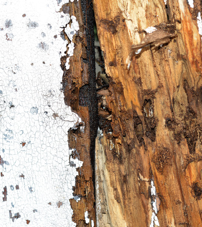 Closeup image of termite damage to a house or fence