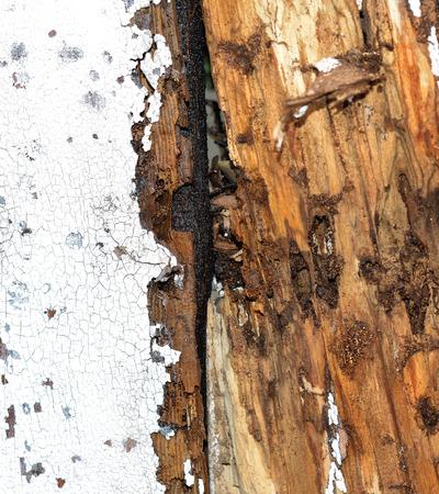Imagen de detalle de los daños de termitas a una casa o una cerca Foto de archivo - 26608064