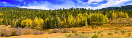 Beautiful Panoramic image of the aspen Trees in Northern New Mexico photo