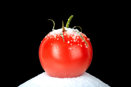 kosher: Very Nice Image of a fresh Tomato on a bed of kosher salt on black.