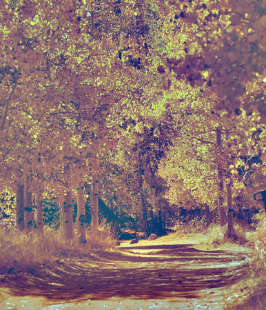 aspen grove: Beautiful fall Colors in Aspen grove in a vintage look and feel