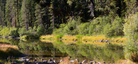 ponderosa pine: Nice Image of the truckee River that Feeds Lake Tahoe Stock Photo
