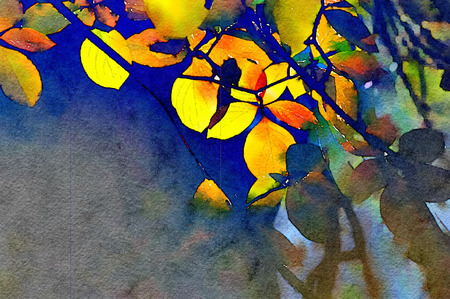 watercolor texture: Beautiful Painting of the aspen leaves in Yosemite Stock Photo