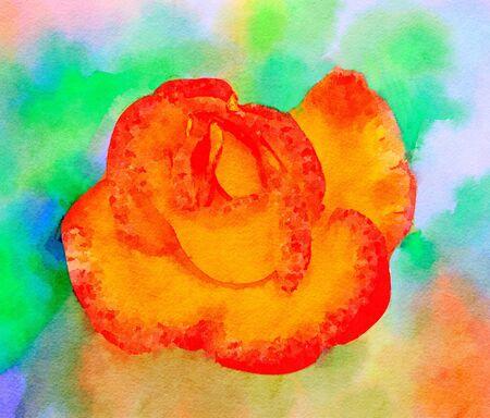 vibrant paintbrush: Wonderful Watercolor painting of a orange rose Stock Photo