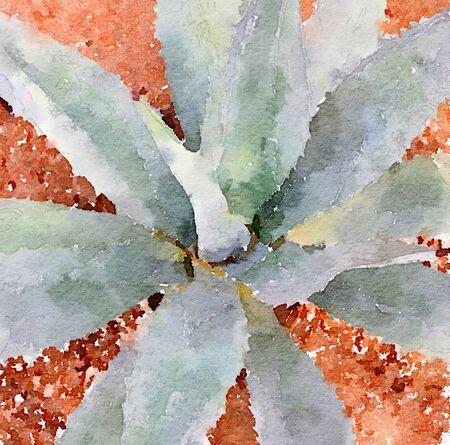 Nice Image of a Landscape plant Aloe Vera Cactus