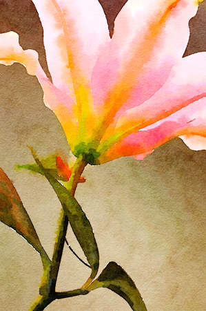 lilly: Very Nice painting of a Pink Lilly Stock Photo