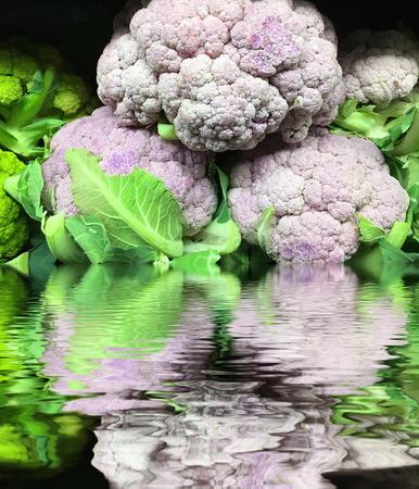 very Fresh Purple califlower in Water