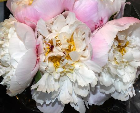 A Beautiful Stunning Bouquet Of Ranunculus
