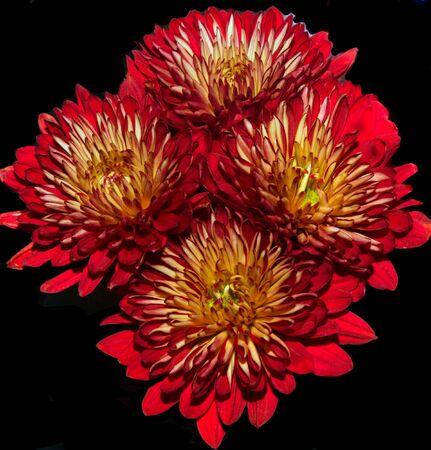 A beautiful Bouquet Of Dahlias On Black Imagens