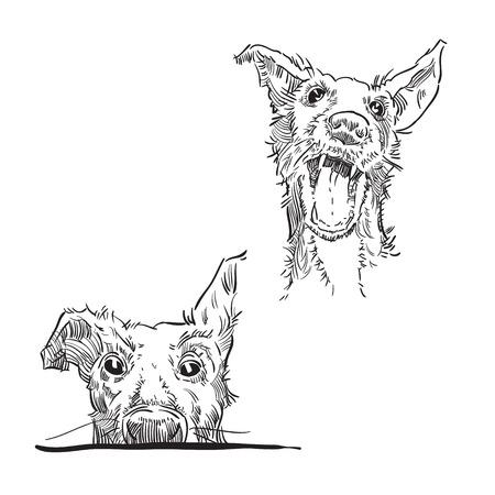 ink sketch: Hand made vector sketch of dog