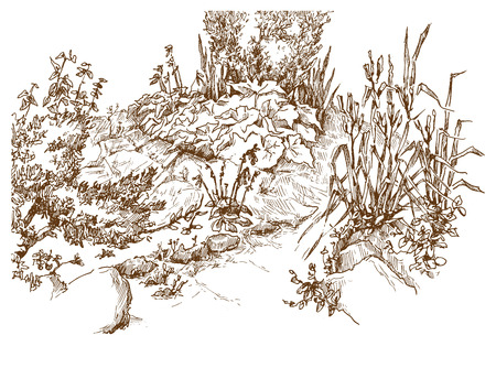 Vector sketch of trees and plants. Editable layers. Illustration