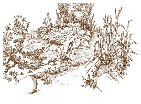 dibujos lineales: Vector el bosquejo de �rboles y plantas. Capas editables.