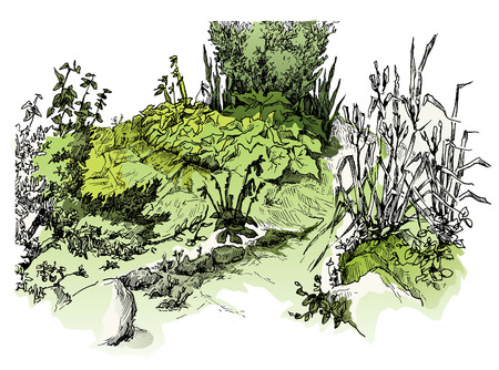 tuscany vineyard: Vector sketch of trees and plants. Editable layers. Illustration