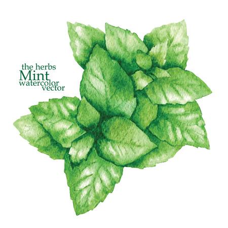 Handgemachte Vektor Skizze der Pflanzen im Vintage-Stil gemacht Vektorgrafik