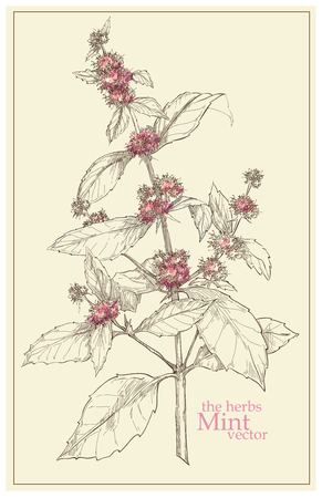 Hand made vector sketch of plants made in vintage style Banco de Imagens - 44816258