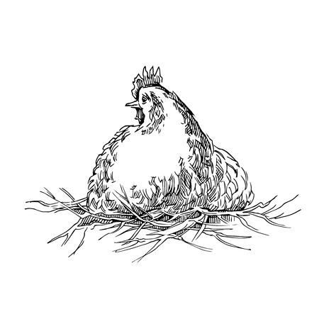 chiken: Hand made sketch of chicken. Vector illustration.