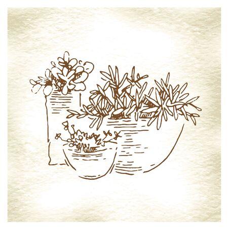 tuinontwerp: Tuinontwerp elementen hand gemaakte schets. Vector illustratie Stock Illustratie