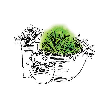 floriculture: Garden design elements hand made sketch. Vector illustration Illustration