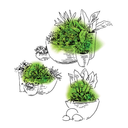 green fields: Garden design elements hand made sketch. Vector illustration Illustration