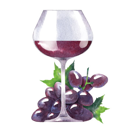 wine grapes: Watercolor sketch of wine and grapes. Vector illustration. Illustration