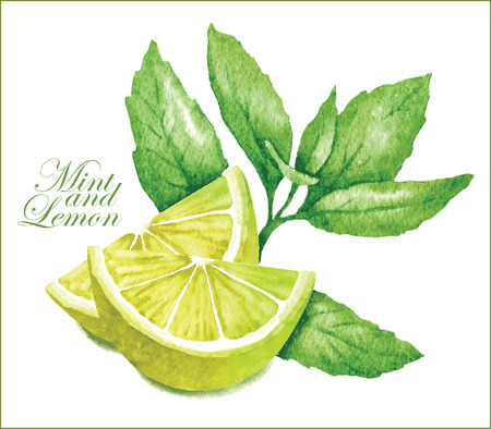 lime juice: Hand made vector sketch of lemon with leaves of mint.