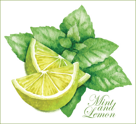 lime: Hand made vector sketch of lemon with leaves of mint.