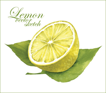 vintage drawing: Hand made vector sketch of lemon with leaves.