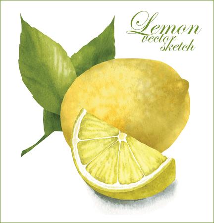 lemon: Hecho a mano dibujo vectorial de lim�n con hojas. Vectores