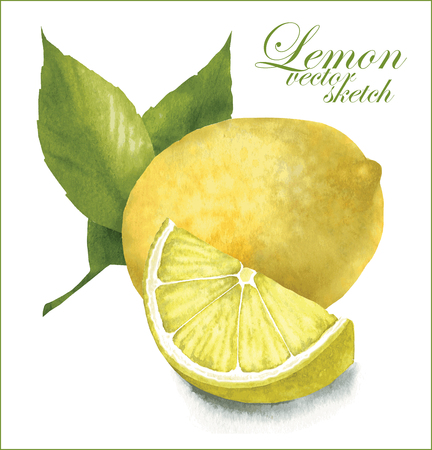 Hand made vector sketch of lemon with leaves.