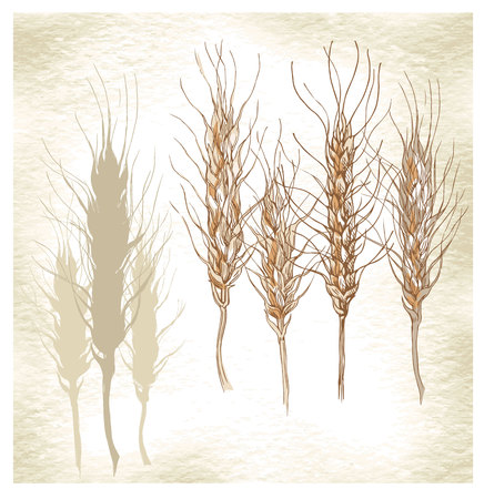 spikes: Hand made vector sketch of bread and spikes. Vector illustration. Illustration