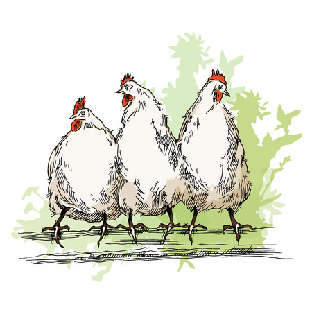 chiken: Hand made sketch of chiken. Vector illustration. Illustration