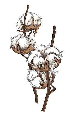 Brunch de algodón dibujado a mano en estilo vintage Ilustración de vector
