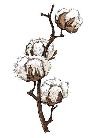 Hand drawn brunch de coton dans le style vintage Vecteurs
