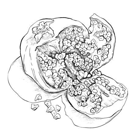 garnet: Hand made vector sketch of garnet made in vintage style. Illustration