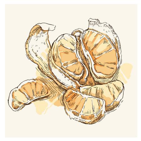 tree line: Hand made vector sketch of mandarine made in vintage style. Illustration