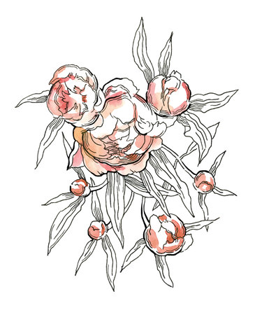 china watercolor paint: Beautiful hand-drawn bouquet of pink peonies. Vector illustration