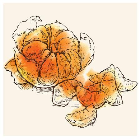 zest: sketch of orange. Orange juice. Orange products. Illustration