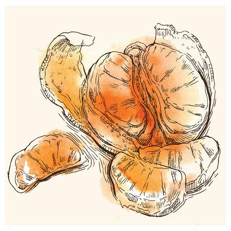 sketch of orange. Orange juice. Orange products. Illustration