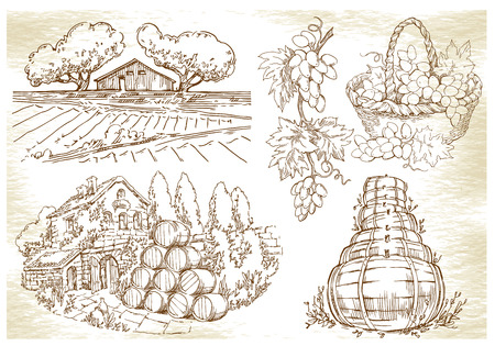 tuscany vineyard: Hand made sketch grape fields and vineyards. Made in vintage style.
