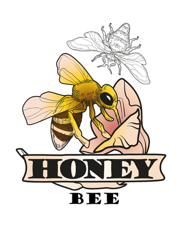 Set of honey and bee labels for honey logo products Illustration
