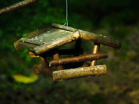 bird feeder: Empty wooden bird feeder in the forest