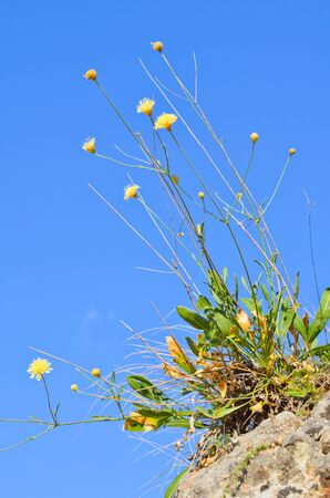 Yellow flowers and blue sky in autumn photo