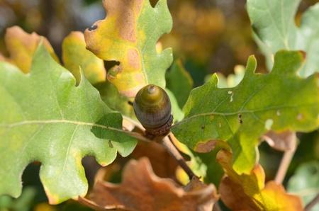 Closeup of brown oak at the wood