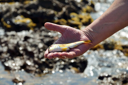 Fresh fish in thehand near the sea