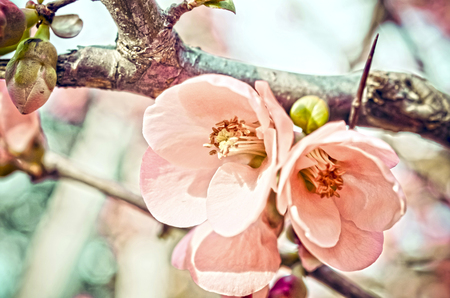 Vintage background of spring blossom of flowers Stock Photo