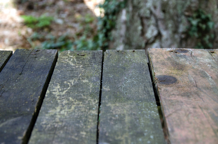 background of table of wood planks over trees in forest
