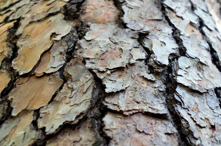 Texture of close up of brown tree bark