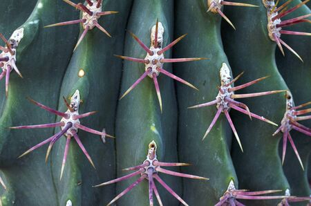 Background of close up of green cactus Stock Photo