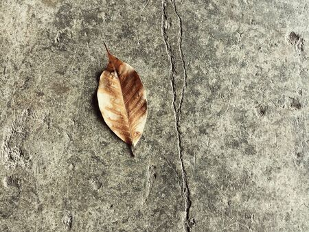 absract art: dried leaf was put on old and grunge surface cement ground floor in abstract design,art style,